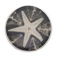 Ring Spider shell/Seestern 925er Silber